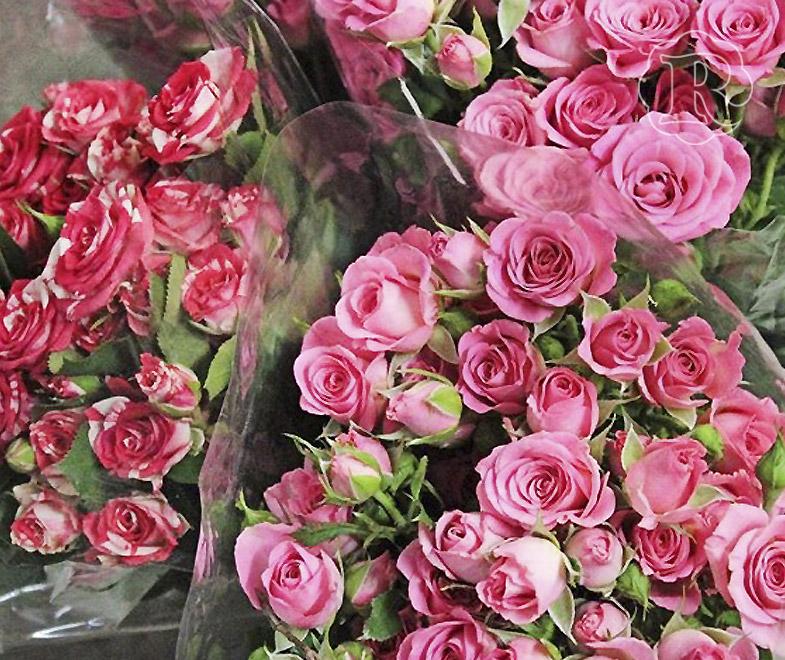 Живые цветы в кемерово оптом доставка цветов в асбесте свердловской области